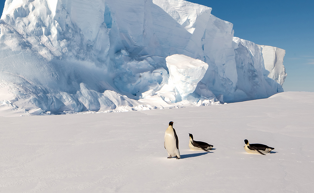Penguins on Luxury AntarcticaCruise